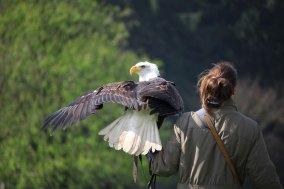 Eagles Who Roar