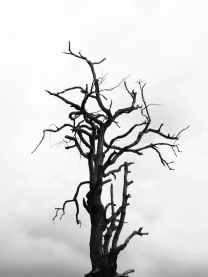 black and white black and white branches cloudy
