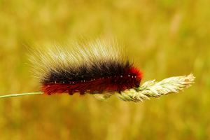 Caterpillar Heart