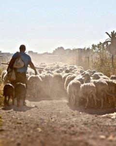 Shepherding Like Christ: Relentlessly Tender