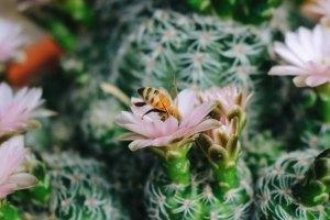 Blossoms In The Desert
