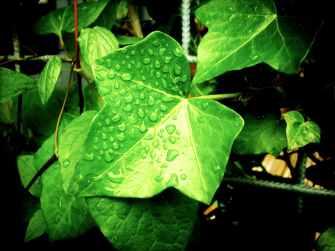 rainy plant leaves rain